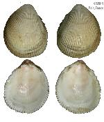 To MNHN Molluscs Type collection (2000-4016)