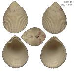 To MNHN Molluscs Type collection (2000-3974)
