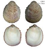 To MNHN Molluscs Type collection (2000-4001)