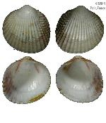 To MNHN Molluscs Type collection (2000-4027)