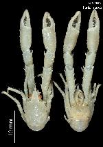 To MNHN Crustaceans Type collection (Holotype: 2013-8324)
