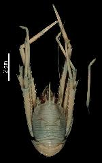 To MNHN Crustaceans Type collection (Holotype: 2014-10695)