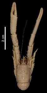 To MNHN Crustaceans Type collection (Holotype: 2014-10735)