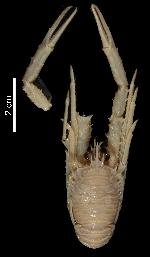 To MNHN Crustaceans Type collection (Holotype: 2014-10738)