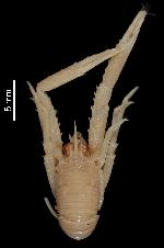 To MNHN Crustaceans Type collection (Holotype: 2014-7279)