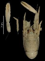 To MNHN Crustaceans Type collection (Holotype: 2014-10816)