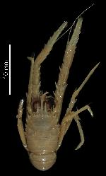 To MNHN Crustaceans Type collection (Holotype: 2014-10907)