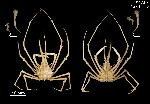To MNHN Crustaceans Type collection (Holotype: 2014-11242)