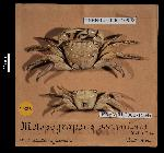 To MNHN Crustaceans Type collection (Lectotype: 2000-10992)