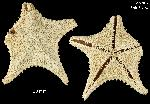 To MNHN Type collection (IE-2014-78)